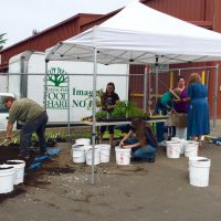 People filling buckets with soil for Bucket Garden Day