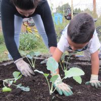Boy and woman planting vegitables