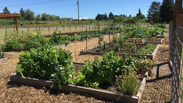 Community Gardens Give Everyone the Chance to Grow