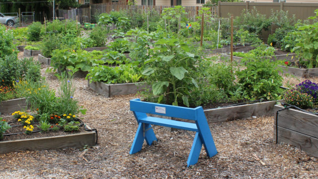 Growing Food and Community Through Gardening
